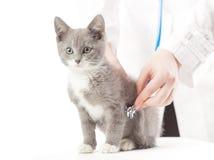 Veterinario con el estetoscopio y el gatito Foto de archivo libre de regalías