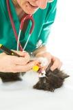 Veterinario con el gatito fotografía de archivo