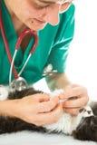 Veterinario con el gatito foto de archivo libre de regalías