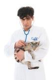 Veterinario con el gato siamés Fotografía de archivo