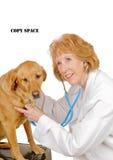 Veterinario con el perro Foto de archivo