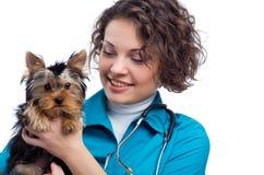 Veterinario con el terrier de Yorkshire Fotos de archivo libres de regalías