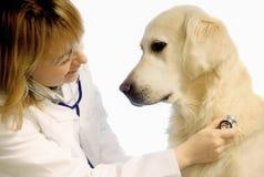 Veterinario con il cane Fotografia Stock Libera da Diritti