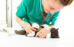 Veterinario con il gattino Fotografia Stock Libera da Diritti