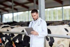 Veterinario con il pc e le mucche della compressa sull'azienda lattiera Immagini Stock Libere da Diritti