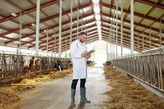 Veterinario con le mucche in stalla sull'azienda lattiera Immagine Stock