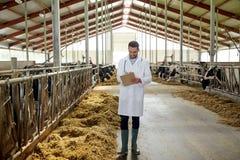 Veterinario con le mucche in stalla sull'azienda lattiera Fotografia Stock