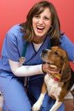 Veterinario con un beagle Imágenes de archivo libres de regalías