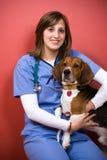 Veterinario con un beagle Imagen de archivo