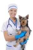 Veterinario con un cane per una rassegna Immagine Stock Libera da Diritti