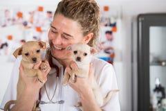 Veterinario con un cucciolo della chihuahua Fotografia Stock