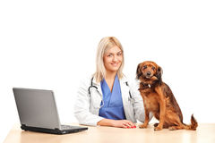 Veterinario de sexo femenino sonriente con un perrito Imágenes de archivo libres de regalías