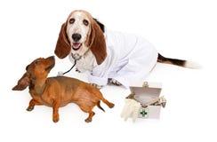 Veterinario del segugio di bassotto con un paziente Fotografie Stock Libere da Diritti