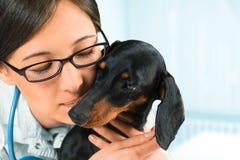 Veterinario della donna con il cane del bassotto tedesco Fotografia Stock Libera da Diritti