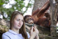 Veterinario della giovane donna che prepara per l'esame di un cucciolo dell'orangutan immagine stock libera da diritti