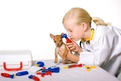 Veterinario della ragazza che controlla le orecchie del cane del cucciolo Fotografia Stock Libera da Diritti