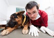 Veterinario divertente con il cane Immagine Stock Libera da Diritti