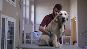 Veterinario durante chequeo de la cardiología del perro en el cuidado de animales de compañía metrajes