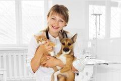 Veterinario e cucciolo e gattino in clinica immagini stock