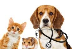 Veterinario e gatto del cane fotografie stock libere da diritti