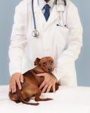 Veterinario ed il suo paziente Fotografia Stock