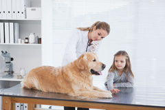 Veterinario feliz que comprueba un Labrador Imágenes de archivo libres de regalías