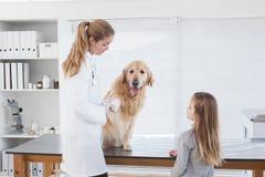 Veterinario feliz que comprueba un Labrador Imagen de archivo libre de regalías