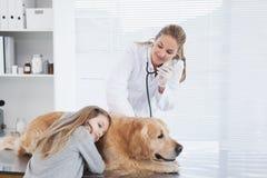Veterinario feliz que comprueba un Labrador Fotografía de archivo libre de regalías