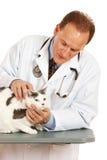 Veterinario: Gato de examen del veterinario de sexo masculino Fotografía de archivo libre de regalías