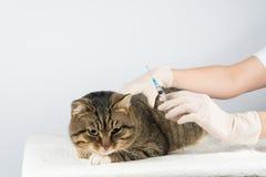 veterinario inoculazione trattamento della malattia animale immagini stock libere da diritti