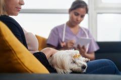Veterinario joven que habla con el dueño del perro durante la visita casera fotografía de archivo