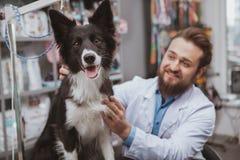 Veterinario maschio barbuto allegro che esamina bello cane fotografia stock