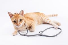Veterinario per il concetto degli animali domestici Fotografia Stock Libera da Diritti