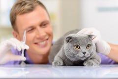 Veterinario positivo che esamina un gatto Fotografia Stock
