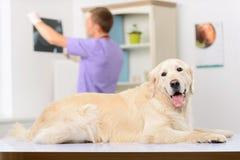 Veterinario professionista che esamina un cane Immagini Stock Libere da Diritti