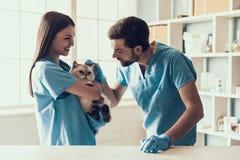 Veterinario professionista sorridente Holding Cute Cat fotografia stock libera da diritti