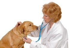 Veterinario que controla el perro Fotografía de archivo