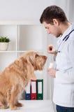 Veterinario que da el medicamento al perro imagenes de archivo