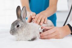 Veterinario que examina un conejito con su dueño Imagen de archivo libre de regalías