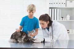 Veterinario que examina un gato con su dueño Fotografía de archivo