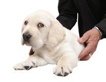 Veterinario que examina un perro de perrito Imagen de archivo