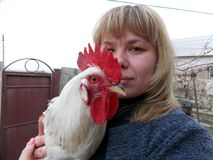 Veterinario que sostiene un gallo en sus brazos en la granja de pollo imágenes de archivo libres de regalías