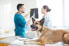 Veterinario que visita del animal doméstico fotografía de archivo