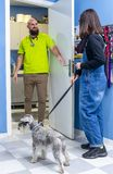 Veterinario ricevendo un cliente con il suo animale domestico fotografie stock