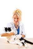 Veterinario sorridente che fa controllo del gatto Immagini Stock Libere da Diritti