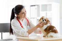 Veterinario sorridente con il cane, sulla tavola nella clinica del veterinario fotografia stock libera da diritti