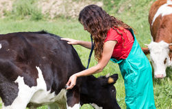 Veterinario su un'azienda agricola fotografia stock