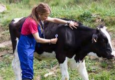 Veterinario su un'azienda agricola fotografie stock