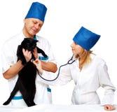 Veterinario y gato imagen de archivo