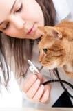 Veterinario y gato Foto de archivo libre de regalías
